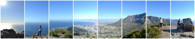Lions Head Collage