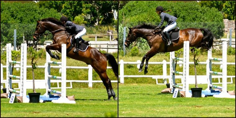 Horse jumping 1
